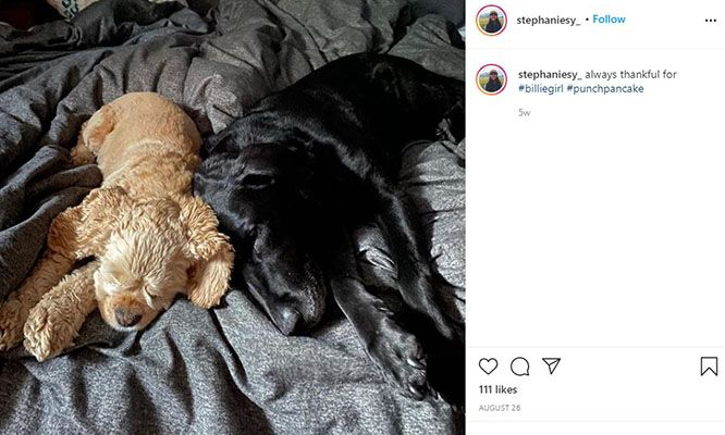 Stephanie Sy Talking about her Pet Dogs in an Instagram Post