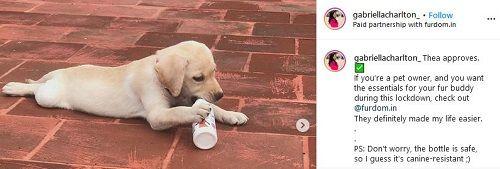 Gabriella Charlton's Pet Dog