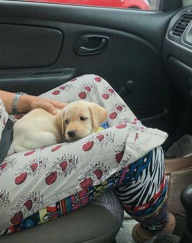 Gabriella Charlton's Pet Dog in Her Lap