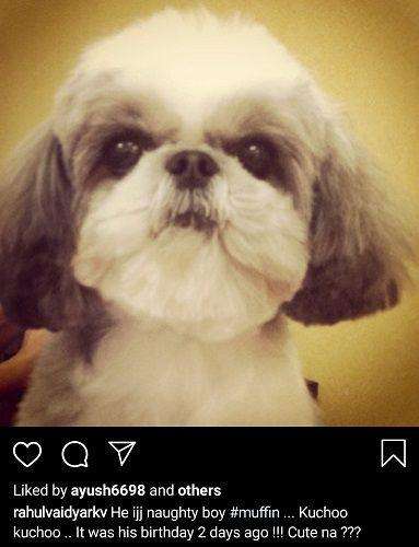 Rahul Vaidya's Pet Dogd