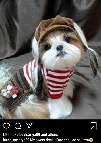 Leena Acharya's Post About Dog